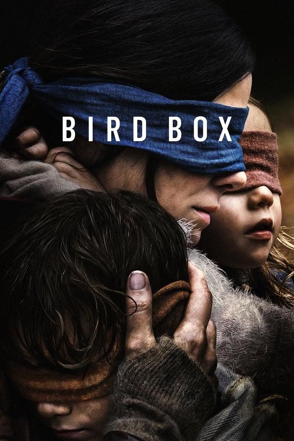 Bird box_Sol Yucatán