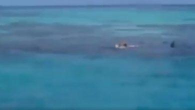 Tiburón Progreso_Sol Yucatán